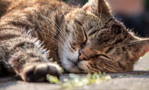 cat-1421136_1280