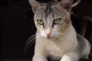 cat-1556792_1280